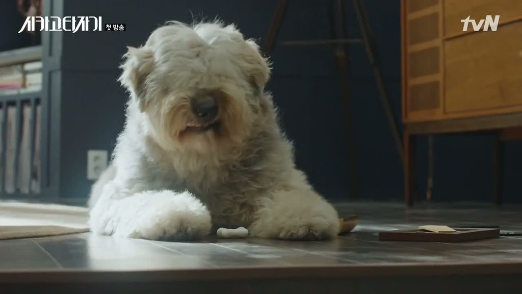 Chicago Typewriter dog